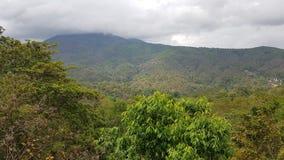 Jungle landscape stock images