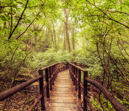 Jungle landscape in vintage style. Wooden bridge at tropical rai Royalty Free Stock Photos