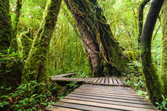 Jungle landscape. Wooden bridge at misty tropical rain forest Royalty Free Stock Photos
