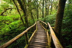 Jungle landscape. Wooden bridge at misty tropical rain forest Royalty Free Stock Photo