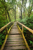 Jungle landscape. Wooden bridge at misty tropical rain forest Royalty Free Stock Images