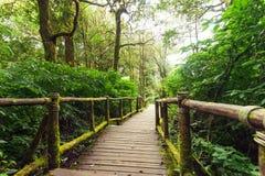 Jungle landscape. Wooden bridge at misty tropical rain forest Stock Photos