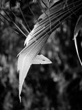 Jungle_leaf Stock Photography