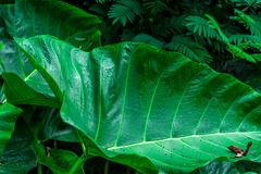 Jungle leaf. Green leaf in Indonesian jungle stock photos