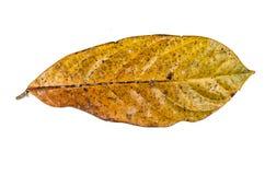 Jungle leaf white background Royalty Free Stock Photos