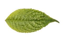Jungle leaf white background Stock Images