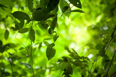 Jungle leaves background Royalty Free Stock Photography