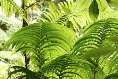 Jungle leaves Royalty Free Stock Images