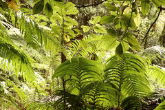 Jungle leaves Royalty Free Stock Photo