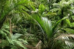 Jungle leaves. Lush green foliage in tropical jungle Royalty Free Stock Images