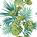 Jungle leaves on a white background. Tropical green Monstera. Stock Photos