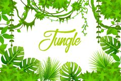 Jungle. liana. rainforest. tropical background. Jungle. liana. rainforest. tropical vector background vector illustration
