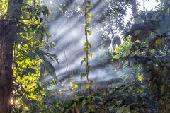 Jungle Light Beams Royalty Free Stock Photography