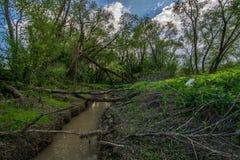 Jungle lithuanienne Photographie stock libre de droits
