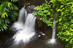 Jungle lush foliage and Falls Stock Image