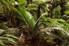 Jungle. Lush green foliage in tropical jungle Stock Photography