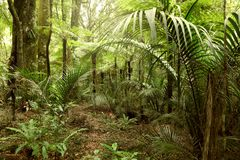 Jungle. Lush green foliage in tropical jungle Stock Photo