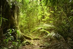 Jungle. Lush green foliage in tropical jungle Royalty Free Stock Photos