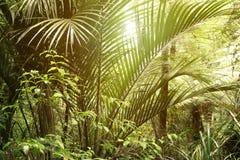 Jungle Royalty Free Stock Photos