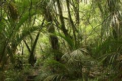 Jungle Stock Image