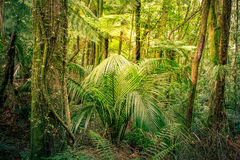 Jungle. Lush green foliage in tropical jungle Royalty Free Stock Photography