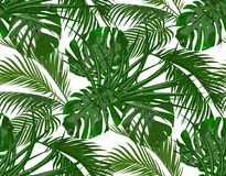 Jungle. Lush green. leaves of tropical palm trees, monstera, agaves. Seamless. Isolated on white background. Vector illustration Stock Photo