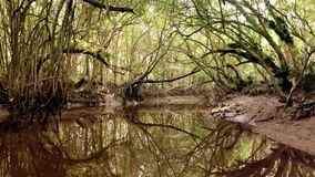 Jungle Mangrove River POV View Through stock footage