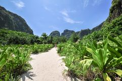 Jungle of Maya bay Phi Phi Leh island, Krabi Thailand, Asia Royalty Free Stock Photo