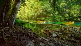 Jungle maya mystérieuse en parc national Semuc Champey Guate image libre de droits
