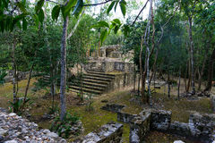 Jungle and Mayan Ruins. Mayan ruins in Coba, Mexico surrounded by jungle stock images