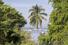 Jungle meets Pacific Ocean Stock Photos
