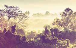 Jungle in Mexico Stock Photo