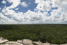 Jungle, Mexico. View of jungle from the top of the Mayan Nohoch Mul Pyramid in Cobá, Mexico, Yucatán royalty free stock images