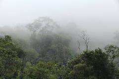 Jungle mist. Brazil - misty jungle in Mata Atlantica (Atlantic Rainforest biome) in Serra dos Orgaos National Park (Rio de Janeiro state Royalty Free Stock Image