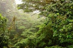 Jungle. In Monte, Costa Rica Stock Photo