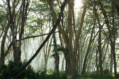 Jungle in morning Royalty Free Stock Photography