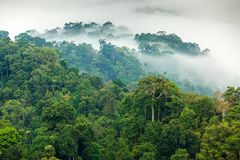 Free Jungle Morning Fog Stock Photography - 40207642
