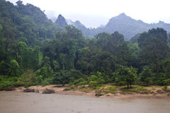 Jungle near Tham Kong Lo cave Stock Image