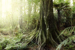 Jungle. New Zealand tropical forest jungle Royalty Free Stock Images