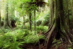 Jungle. New Zealand tropical forest jungle Royalty Free Stock Photo