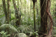 Jungle. New Zealand tropical jungle forest Stock Photos