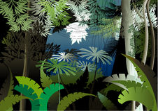 Jungle night. Overgrown plants in the jungle Stock Image