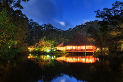 Jungle night reflection Royalty Free Stock Photo