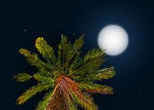 Jungle at night. Vector background with moon and Stock Images