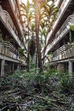 Jungle overgrown buildings Royalty Free Stock Photography