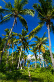 Jungle Palm trees with coconuts on a tropical island. Way through tropical palm trees to exotic beautiful beach with azure sea, Indonesia, Bali island Stock Image