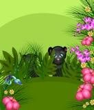 Jungle panthers Royalty Free Stock Image