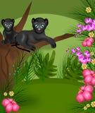 Jungle panthers Royalty Free Stock Photos