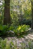 Jungle Park Royalty Free Stock Photography