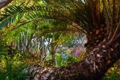 Jungle park at Tenerife Canary Royalty Free Stock Photography